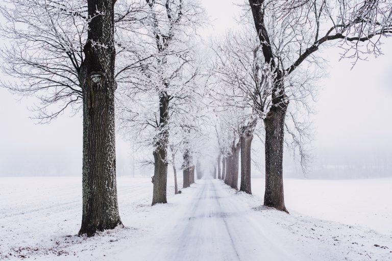 חיזוק מערכת החיסון בחורף